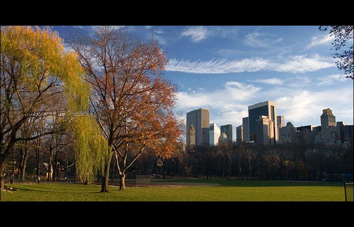 Vacant Park View