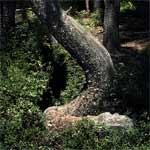 Ess Tree