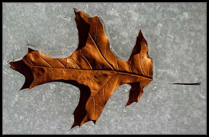 Leaves Do Fall