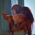 Orangutan Paper Bag