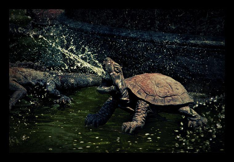 Puking Turtle