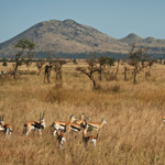 Typical Serengeti