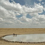 Hyena Pool