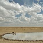 Hyena Pool