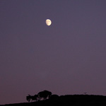 Eucalyptus Moonrise #2