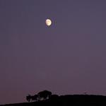 Eucalyptus Moonrise #2